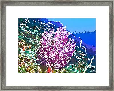 Beautiful Sea Fan Coral 2 Framed Print by Lanjee Chee