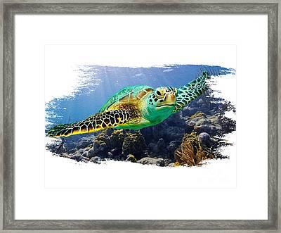 Beautiful Sea Turtle On White Framed Print