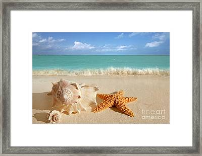 Beautiful Shell On Sand Framed Print