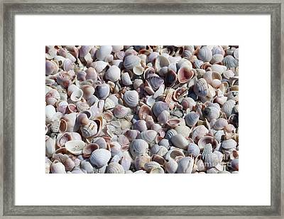 Beautiful Shells Framed Print