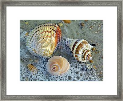 Beautiful Shells In The Surf Framed Print