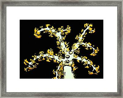 Beautiful Soft Coral 2 Framed Print by Lanjee Chee