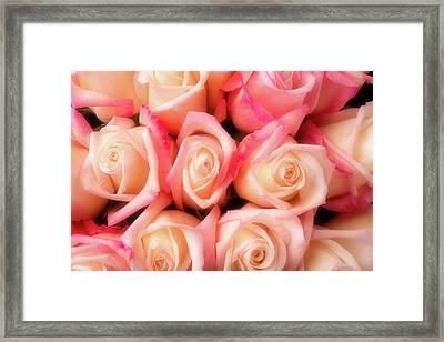 Beautiful Soft Pink Roses Framed Print