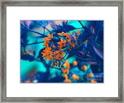 Framed Print featuring the photograph Beautiful Solanum Septemiobum Flowers  by Lance Sheridan-Peel