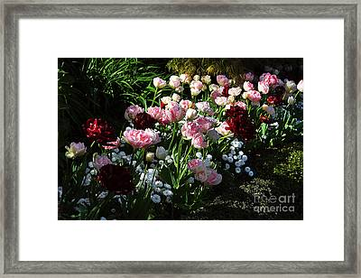 Beautiful Spring Flowers Framed Print by Louise Heusinkveld