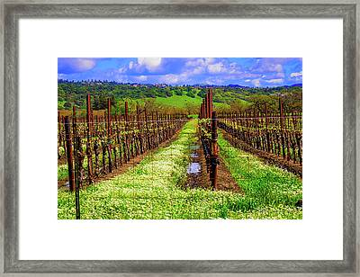 Beautiful Spring Vinyard Framed Print by Garry Gay