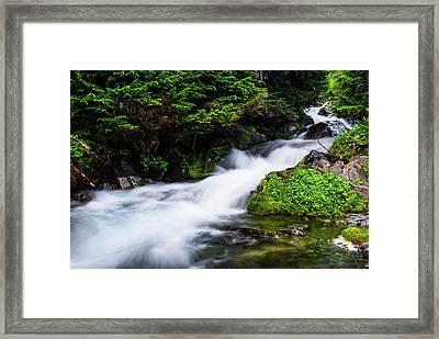 Beautiful Stream In Mt Rainier National Park Framed Print by Vishwanath Bhat