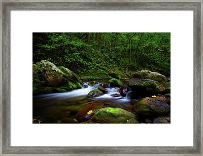 Beautiful Stream In Tremont Smoky Mountains Tennessee Framed Print
