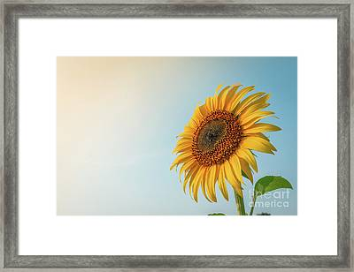 Framed Print featuring the photograph Beautiful Sunflower And Sun Light Form Top Left. by Tosporn Preede