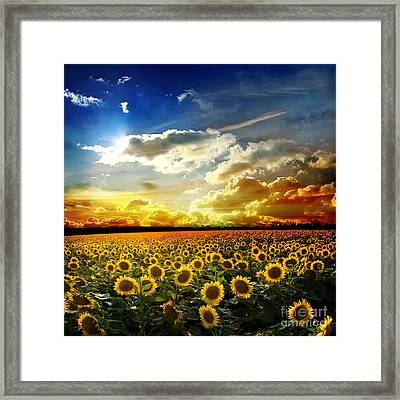 Beautiful Sunset Over A Field With Podsolnuzami Framed Print by Caio Caldas