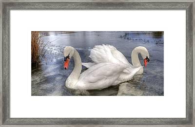 Beautiful Swans Framed Print by Svetlana Sewell