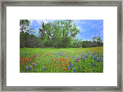 Beautiful Texas Spring Framed Print