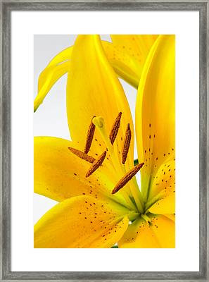 Beautiful Tiger Lily Framed Print