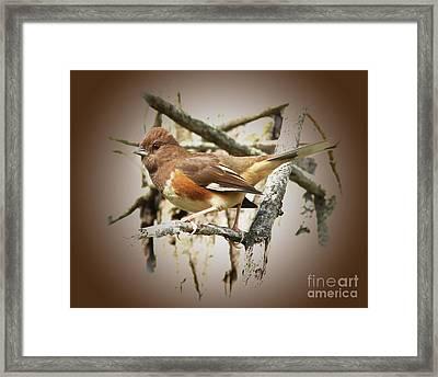 Beautiful Towhee Framed Print by Anita Oakley