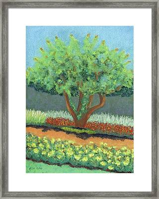 Beautiful Tree Framed Print