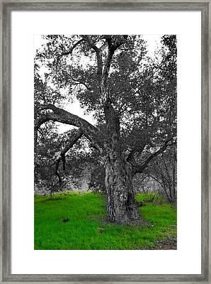Beautiful Tree Framed Print by Bransen Devey