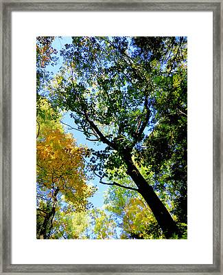 Beautiful Trees In The Forest 13 Framed Print by Lanjee Chee