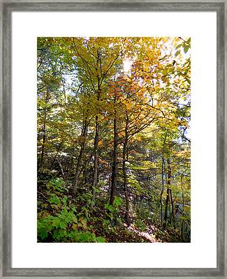 Beautiful Trees In The Forest 2 Framed Print