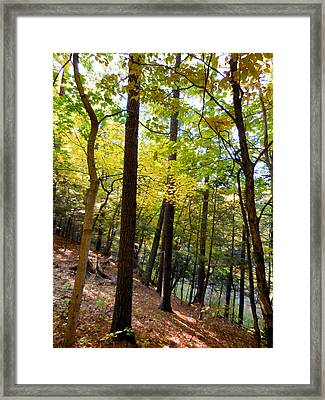 Beautiful Trees In The Forest 3 Framed Print