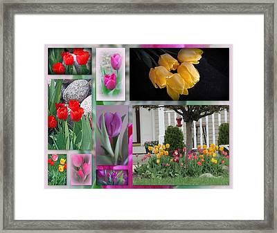 Beautiful Tulips Collage Framed Print