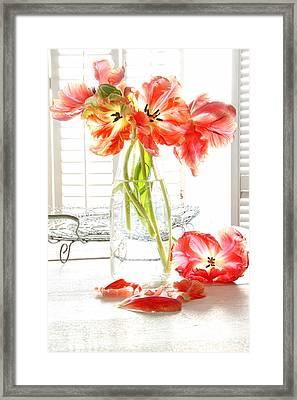 Beautiful Tulips In Old Milk Bottle  Framed Print