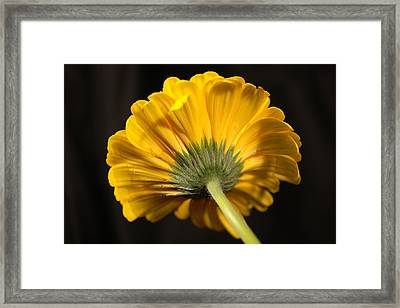 Framed Print featuring the photograph Beautiful Underside by Jeff Swan