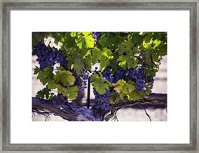 Beautiful Vineyards Framed Print by Garry Gay