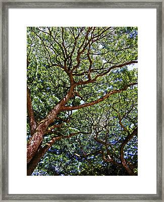 Beautiful Waimea Trees Framed Print