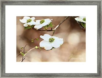 Framed Print featuring the photograph Beautiful White Flowering Dogwood Blossoms by Stephanie Frey