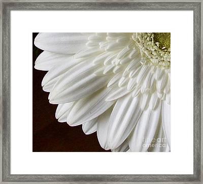 Beautiful Whiteness Framed Print by Marsha Heiken