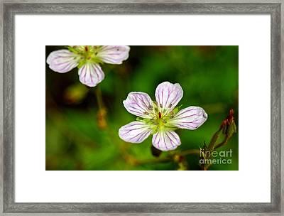 Beautiful Wild Flower Framed Print