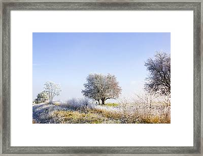 Beautiful Winter Background With Snow Tipped Trees Framed Print by Jorgo Photography - Wall Art Gallery