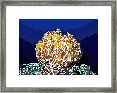 Beautiful Yellow Coral 1 Framed Print by Lanjee Chee