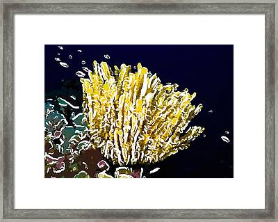 Beautiful Yellow Coral 3 Framed Print by Lanjee Chee