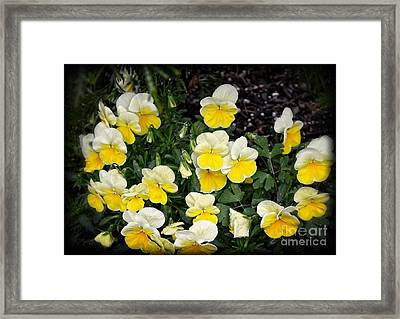 Beautiful Yellow Pansies Framed Print by Eva Thomas