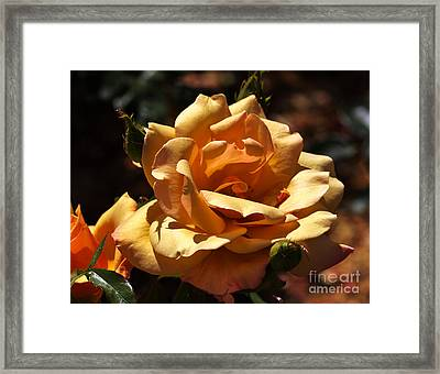 Beautiful Yellow Rose Belle Epoque Framed Print by Louise Heusinkveld