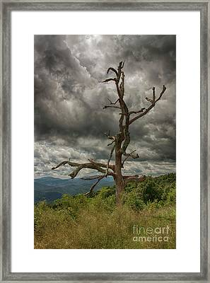 Beautifully Dead Framed Print