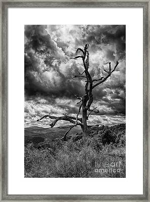 Beautifully Dead In Black And White Framed Print