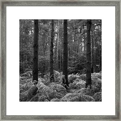 Beautifully Toned Black And White Landscape Of Woodland In Autum Framed Print by Matthew Gibson