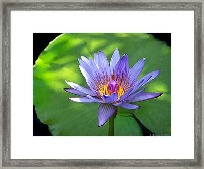 Beauty Afloat Framed Print