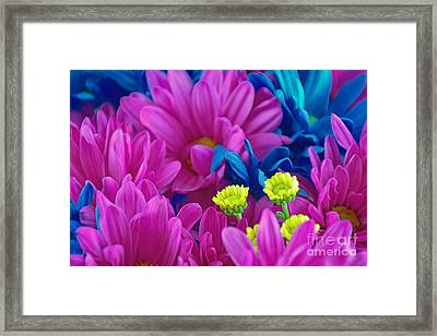 Beauty Among Beauty Framed Print by Ray Shrewsberry