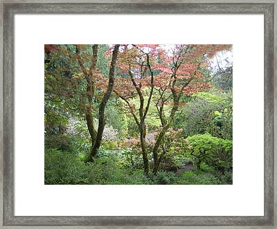 Beauty Among The Trees Framed Print by Shirley Sirois