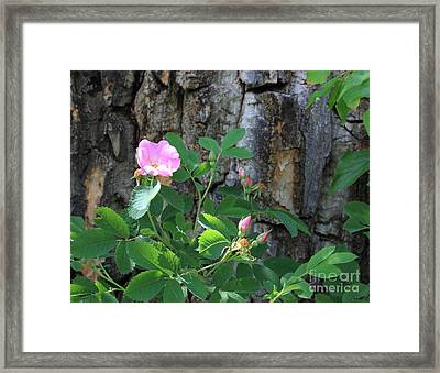 Beauty And The Beast Framed Print by Jim Sauchyn