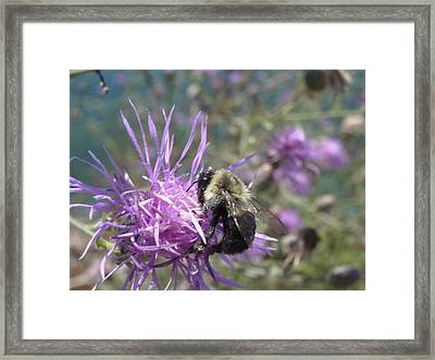Framed Print featuring the photograph Beauty And The Beast by Martha Ayotte