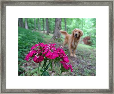 Beauty And The Beast. Framed Print