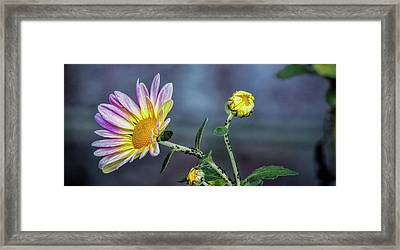 Beauty And The Beasts Framed Print by Dave Bosse
