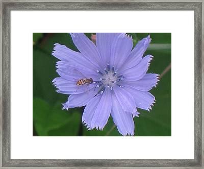 Beauty And The Bee Framed Print by Marjorie Tietjen