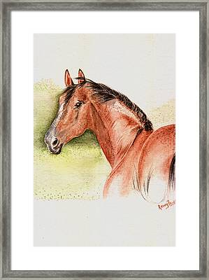 Brown Horse From The Wild Framed Print by Remy Francis