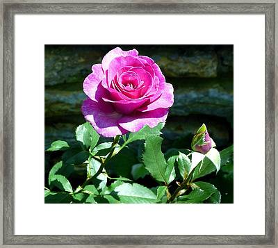 Framed Print featuring the photograph Beauty And The Bud by Will Borden