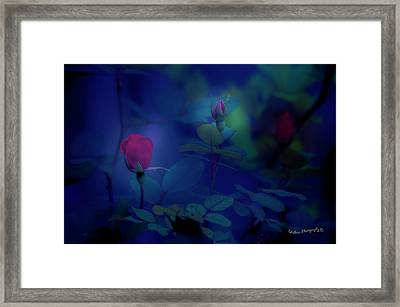 Beauty And The Mist Framed Print